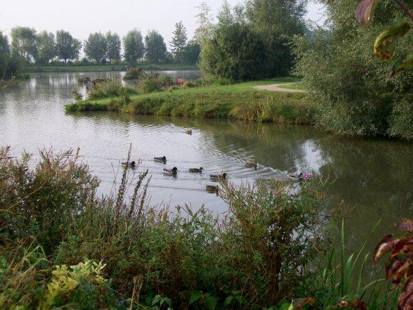 Ma petite balade de ce matin ,  autour de l'étang de Don !