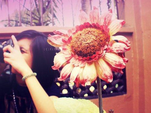 Flowers like u <3