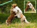 Photo de Horses-forever1236