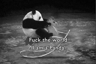 I am a Panda.