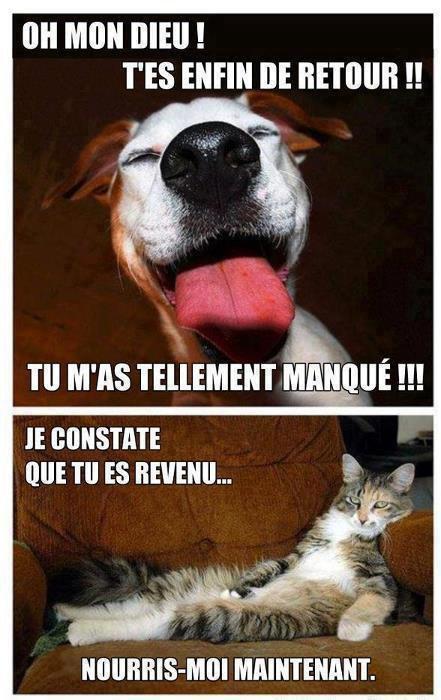 La diffrerence entre chien et chat ...