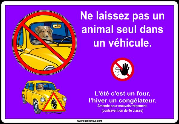 Les animaux dans les véhicules