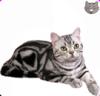 Les races de chats sur myecat