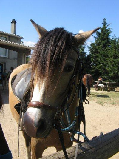 poney d'eole