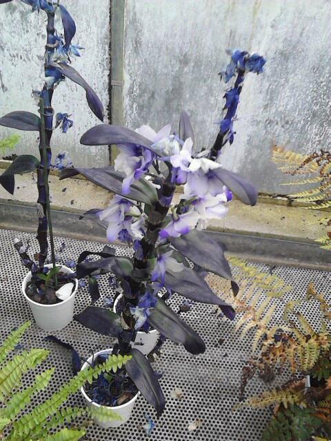 Plante bleu