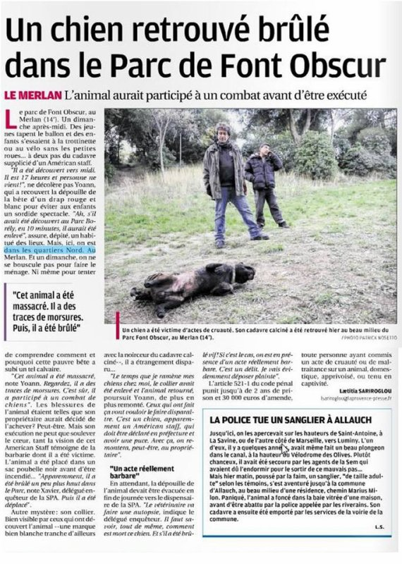 sauver les animaux