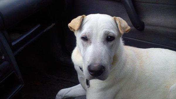 Ma petite chienne Kaïra , si tu ete la ma fille Melina pour toi papa je taime