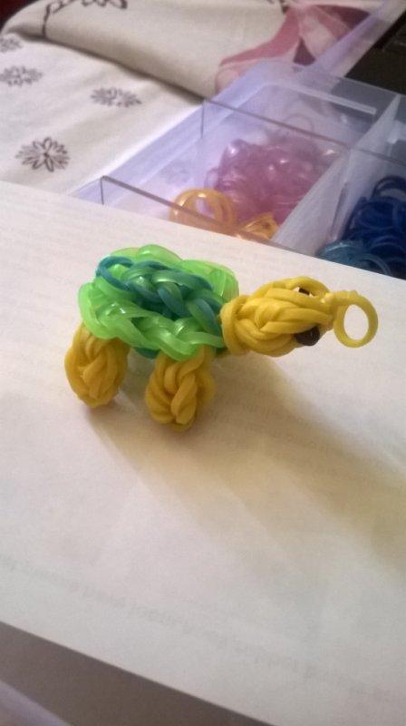 tortue elastique