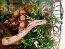 Photo de serpent-especes