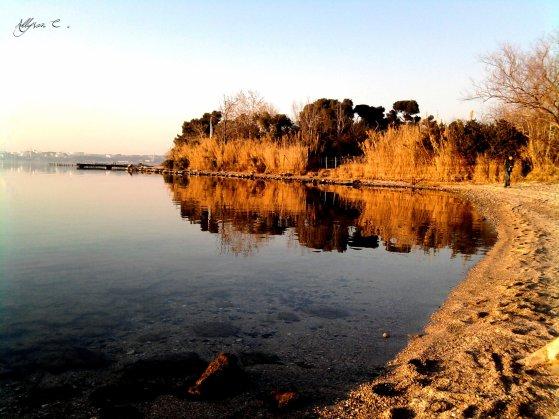 Paysage d'un étang
