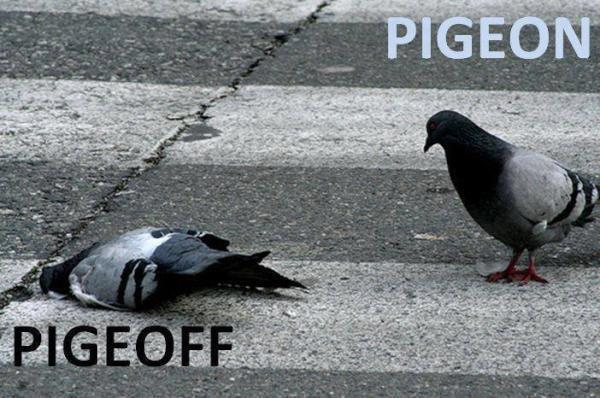 Pig On / Pig Off