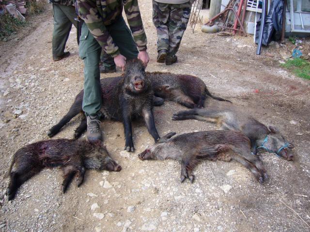 bonne matinée de chasse