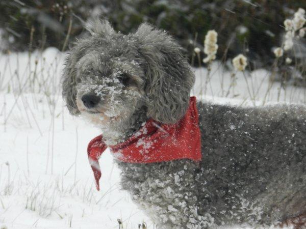 Wood et content il va pouvoir se rouler dans la neige