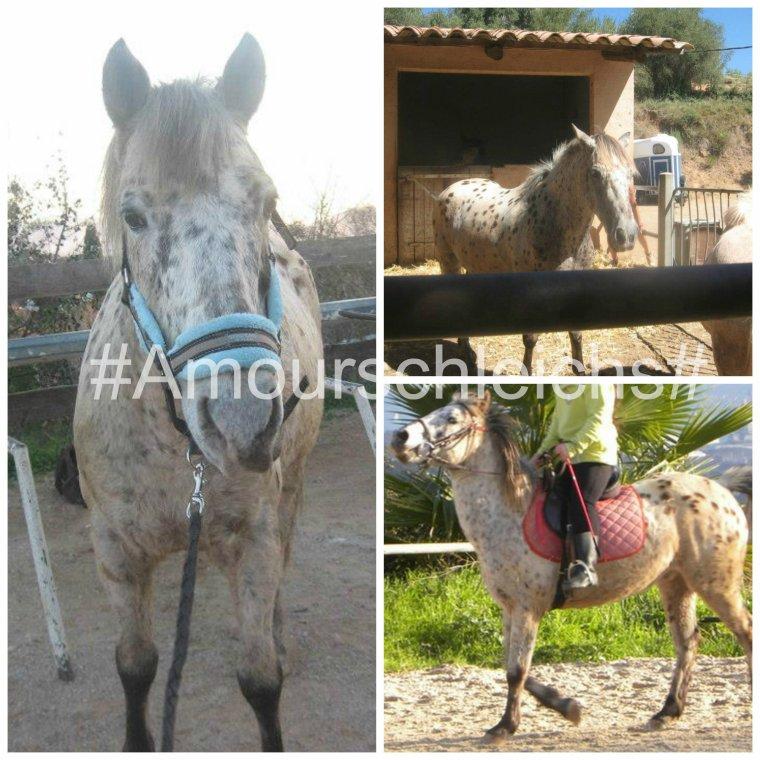Présentation des poneys: Smarties