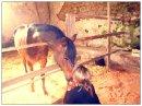 Photo de poney-amour