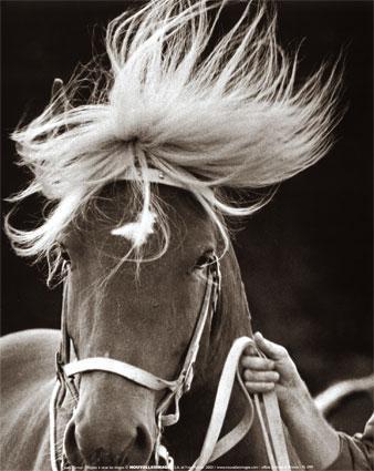 Bienvenue dans l'univers des chevaux