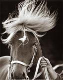 Photo de Zz-horses-zZ