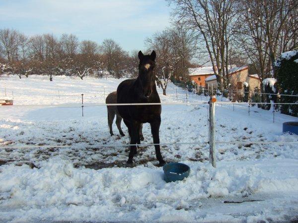 T'choupi sous la neige
