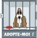 Photo de adoption-chien