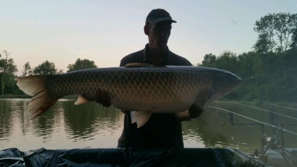 Record amour blanc 17.2kg