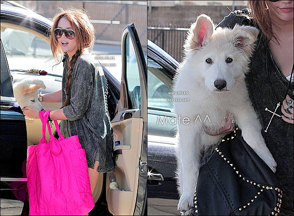 20/02/2010 : Miss miley cyrus et son chien mate se rendent à un studio Alors top ou bien Flop ?.!