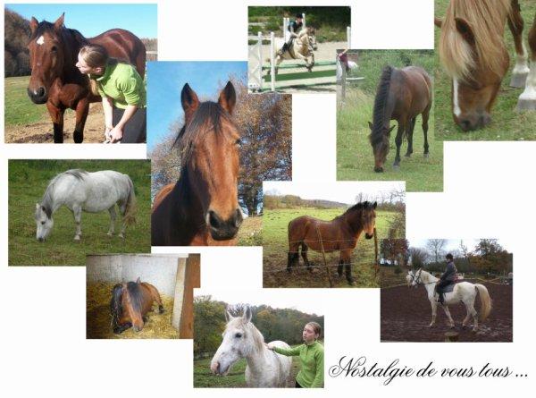 Article 6 : Avant toi & moi, il y avait moi avec des chevaux de club... Maintenant j'ai toi et eux à côté, et franchement ça change tout.