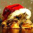 Pack AVATARS Noël