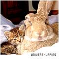 Photo de Univers-Lapins