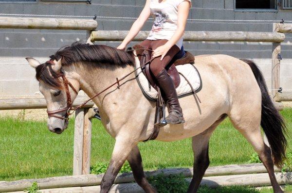 Un peu de plat sous le soleil...petit poney se perfectionne à vitesse grand V ces dernières semaines !!