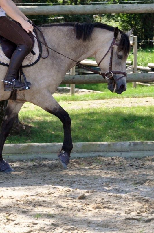 Un peu de plat sous le soleil...petit poney se perfectionne à vitesse grand V ses dernières semaines !!