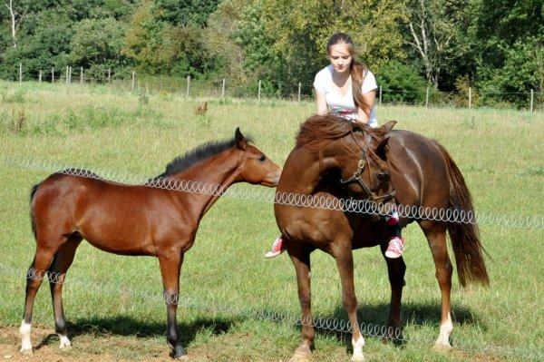 Des amours de poneys