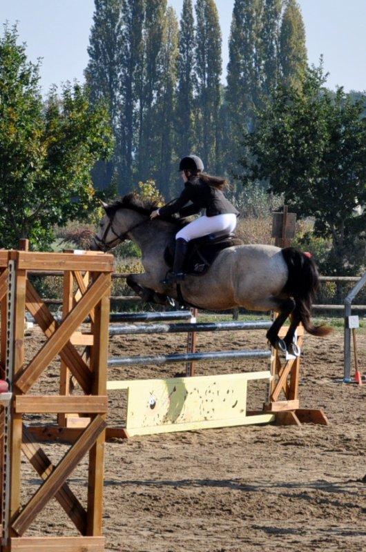 16 Octobre 2011 - Villevêque - Poney 1 et As Ponam D1
