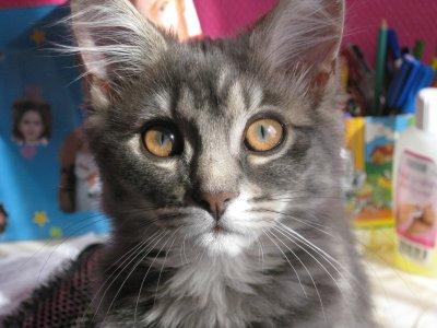 Mon chat :) (l)
