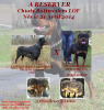 A RESERVER CHIOTS ROTTWEILERS LOF POUR FIN JUIN 2014