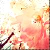 Pack : Fleurs de Cerisiers