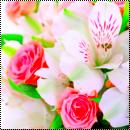 Pack : Fleurs