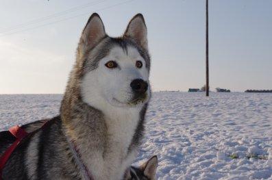 Baghéra à la neige