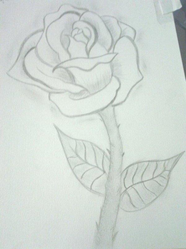 Débutons avec une rose