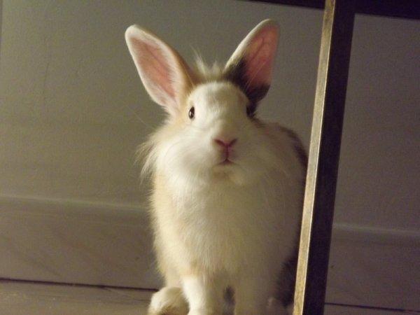 Sweetie ma lapine ♥