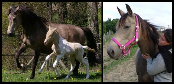 Mes chevaux...