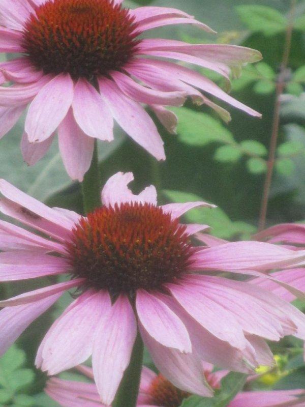 une petit e photo avec des fleur