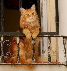 enfin je peu profiter du balcon cool