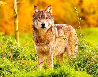 voici un de mes animaux préférés
