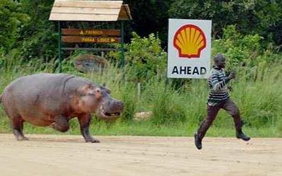 Attention à l'hippo !
