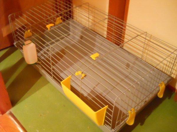 Cage achetée :)