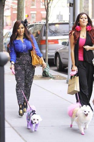 Snooki et JWOOW Avec leur petit chien teindu
