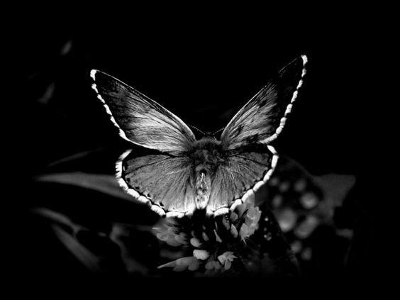 L'effet papillon. Mon nouveau bébé.