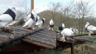 Bonjour et bienvenue au pays des oiseaux heureux!