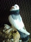 Photo de oiseauxdefee