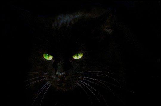 chatte noir J AIME